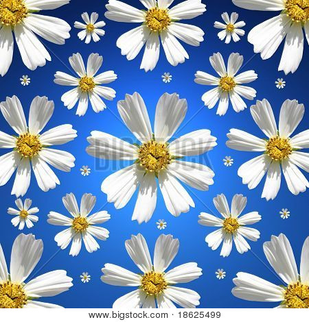 Daisy collection on a blue background