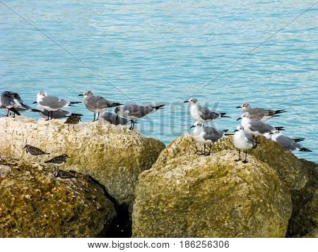 gulls sitting on the rocks near the water.