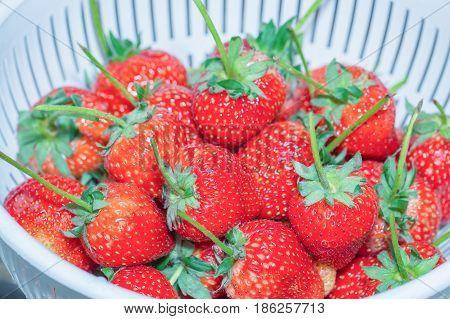 Fresh strawberries in the white plastic colander