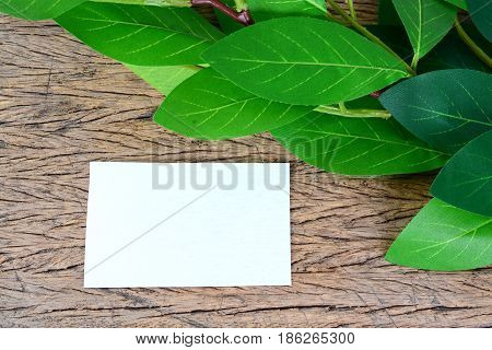 green leaves and blank card isolated on wooden.