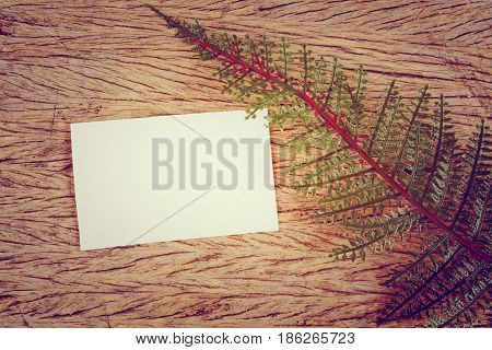 Close up of green leaves and blank card on wooden.