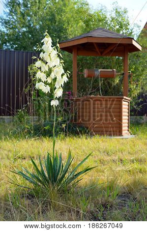 Lonely white blooming flower and wooden well