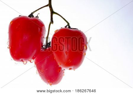 Fetus of tomatoes notable of a hight gustatory and dietary qualitys. poster