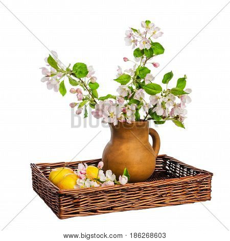 Branch of blossoming apple-tree in clay pitcher on white background close-up