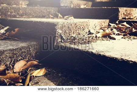 Dried Leaves on Cement Steps Nature