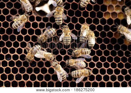 some working bees on a dark bees wax