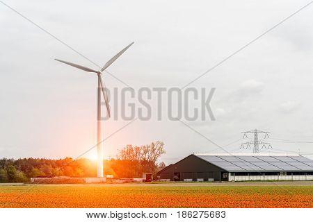 Beautiful sunset above the windmills on the tulip field