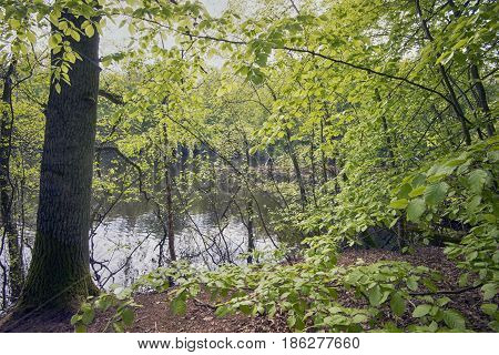 Early beech forest close to lake in Denmark