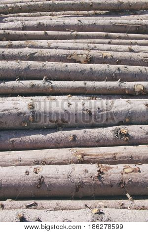 Storage of logs. Logging. Wooden pine lumber