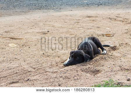 black young dog lie down on the sand