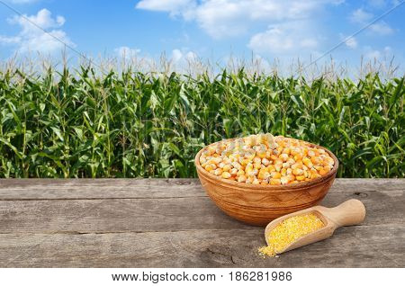 uncooked corn seeds in bowl with cornmeal porridge in scoop on wooden table with green field on the background. Agriculture and harvest concept. Maize with maize field background