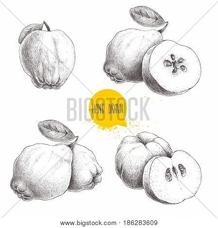 Hand drawn sketch style set of quinces. Quince apple with leaf group of quinces and sliced quince. Eco fruit vintage vector illustration isolated on white background.