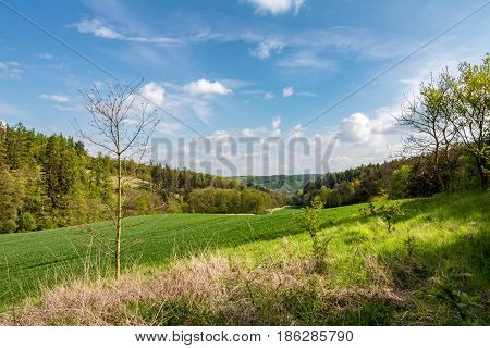 Spring landscape with green meadow forest and blue sky with white clouds - Czech Republic Europe