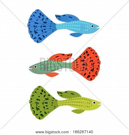 Beautiful guppy fish. set of colorful aquarium fish. vector illustration