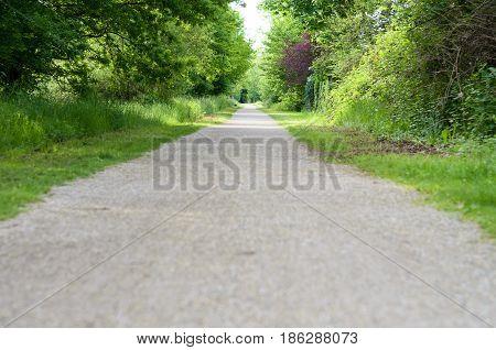 Empty Rural Road Through Leafy Spring Woodland