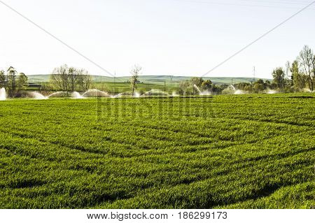 Irrigated agriculture, irrigated agricultural land, pictures of irrigated wheat fields