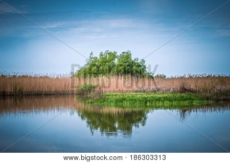 Canal with trees and vegetation reflected in the water. Specific landscape of this area.