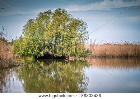 Danube Delta in Tulcea county, Romania. Canal with trees and vegetation reflected in the water. Specific landscapte of this area.