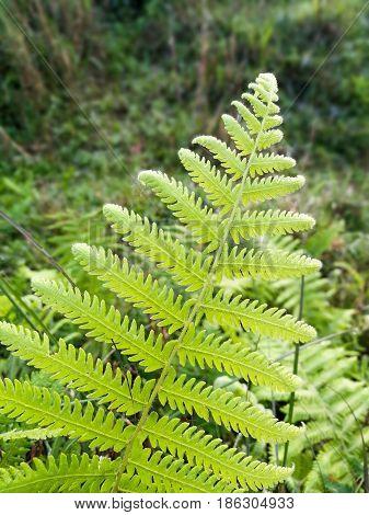 A frond of a fern in a meadow.