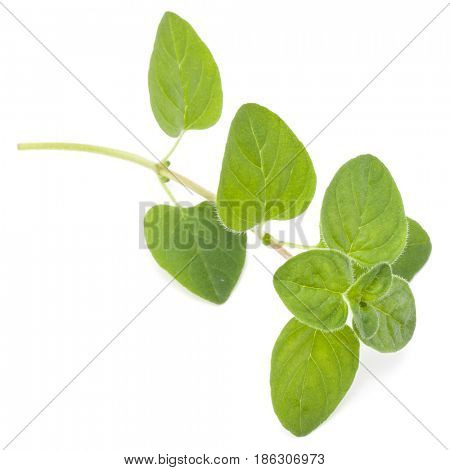Oregano or marjoram leaves isolated on white background cutout