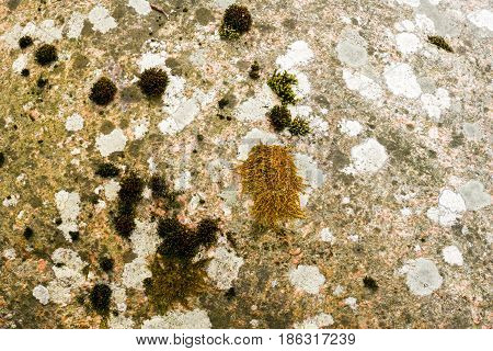 A natural stone with overgrown moss on it and a textured pattern