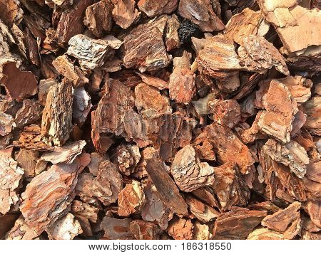 Background is composed of pieces of tree bark (splinters) closeup