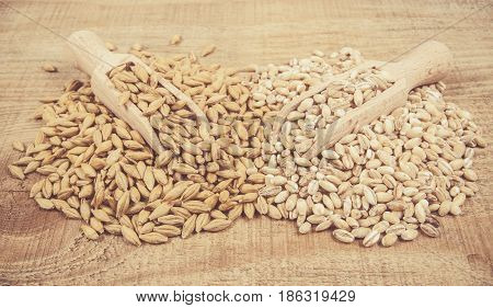 Barley Grain Or Seeds And Pearl Barley.