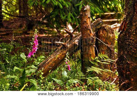 A bent stump near forest in the mountains