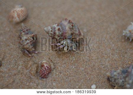 Hermit crab walking along beach on island