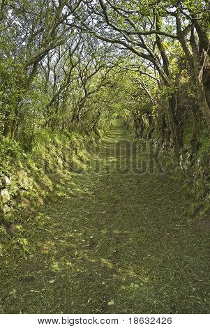 Green Country Lane