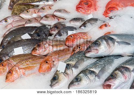 Fine fish on ice for sale at a market