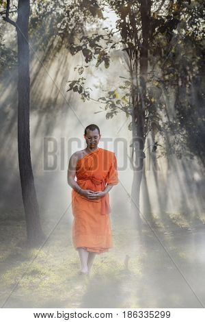 Novice pilgrimage to the forest alone Novice monk went on a pilgrimage alone.
