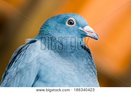 Pigeon posing for photo in colorful place