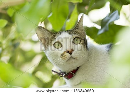 White cat looking above from behind green leaves