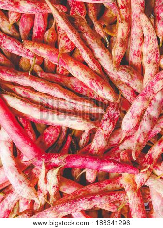 Cranberry Beans, Faded Vintage Look