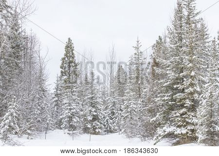 A wintery scene during a storm