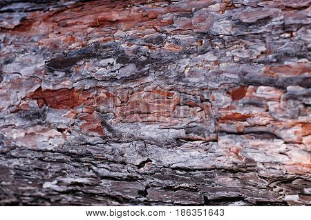 The Texture Of Tree Bark Closeup, Bark Texture Background Image