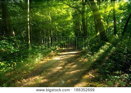 Wide sun drenched wooded path at Sarett Nature Center Michigan.