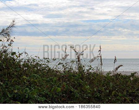 sea oats and ocean landscape Sanibel Island Florida