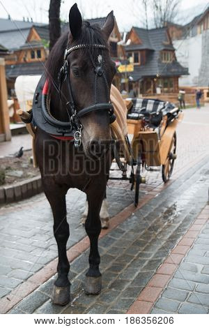 Horses in a harness in a touristic village Zakopane Poland