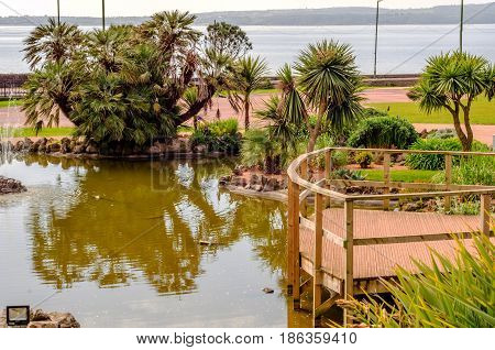 Pond In The Urban Garden, A Beautiful Exotic Plants, Lush Vegetation, Relax In The Urban Garden