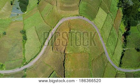 Aerial view of beautiful farmland landscape with terraced system and empty road in Majalengka West Java Indonesia