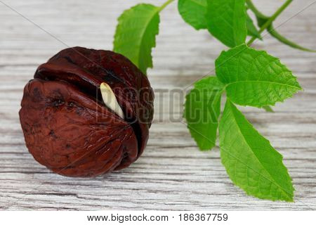 Sprout of a young walnut on wooden background