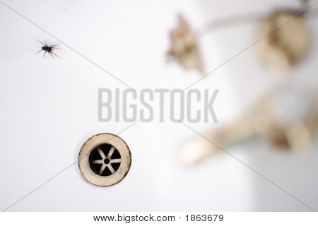 Spider In The Bathtub