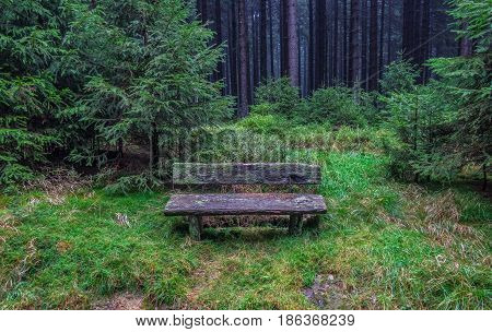 The Old Bench  In  Forest In Harz, Germany