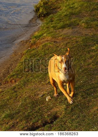 Dog Running Photo On Sunny Lake Bank