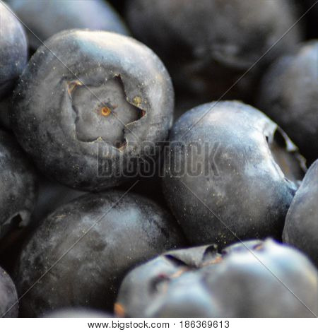 Several blueberries in close-up macro from beneath