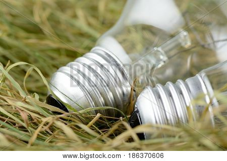 Environmentally Unfriendly Incandescent Bulbs On The Dry Grass