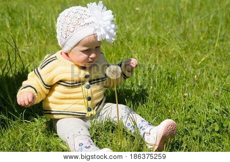 A little girl is sitting on the green grass with a fluffy dandelion