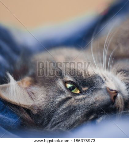 The cat is lying on the bed close up